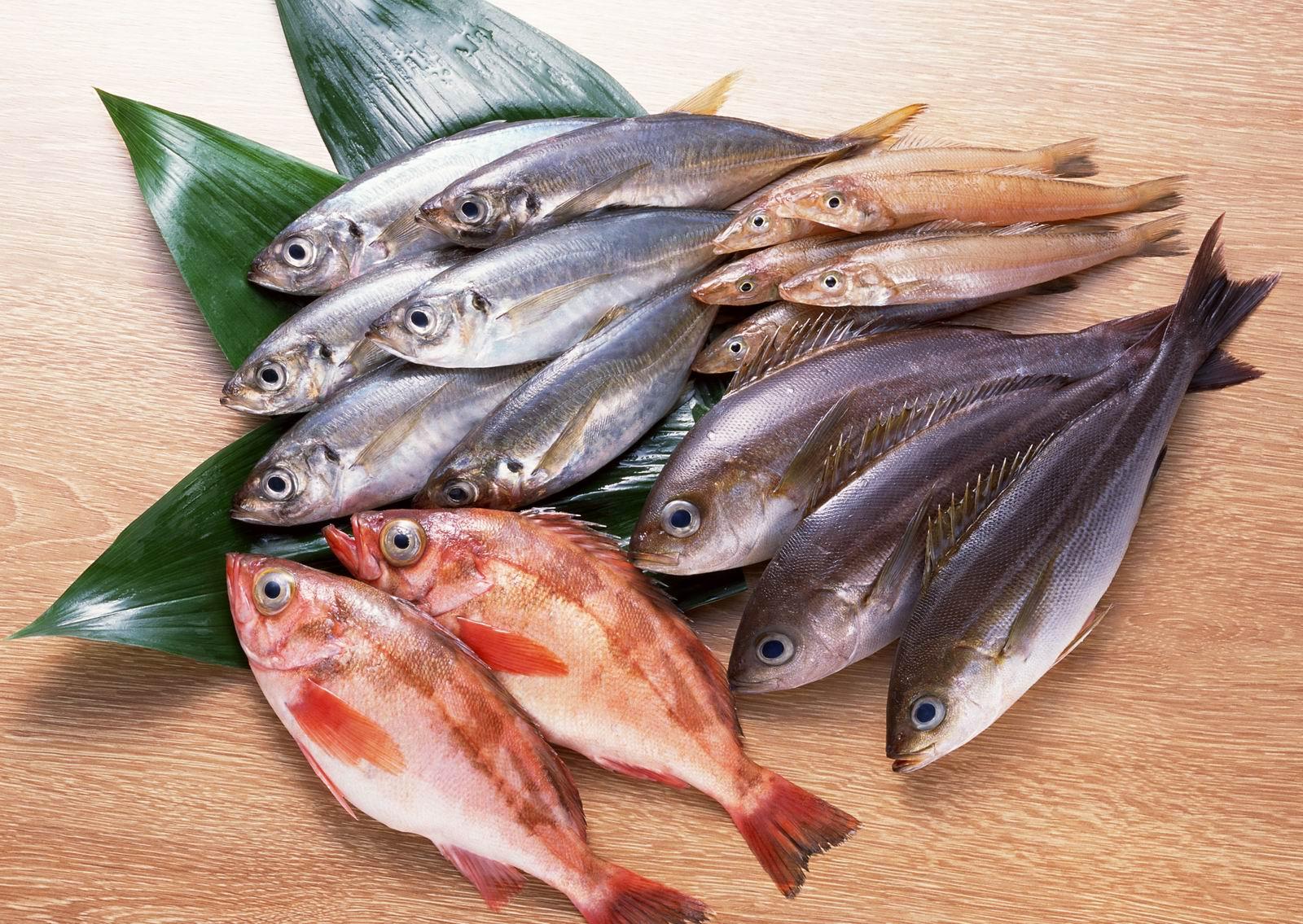 tubuh ikan
